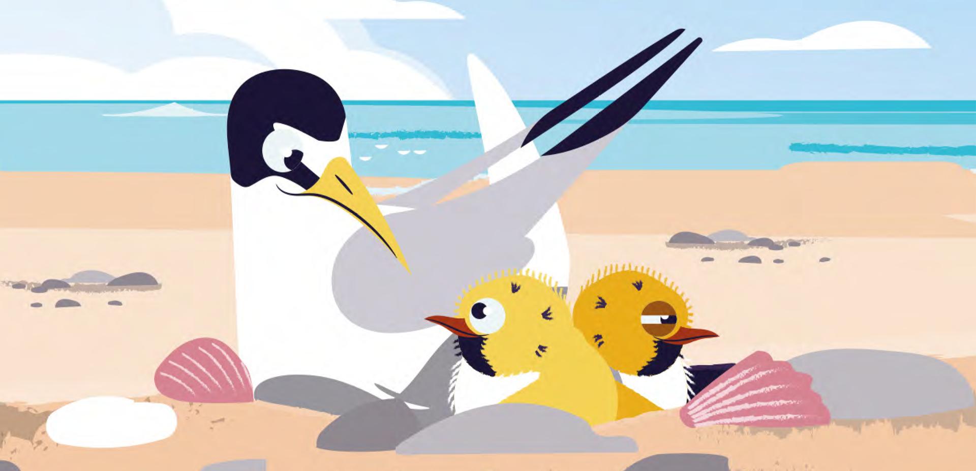 Little tern illustration